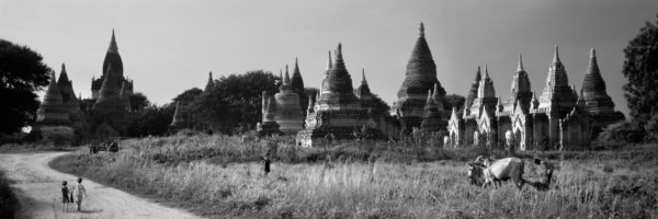 Farming amongst the temples in myanmar