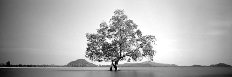Lone mangrove tree on the coast