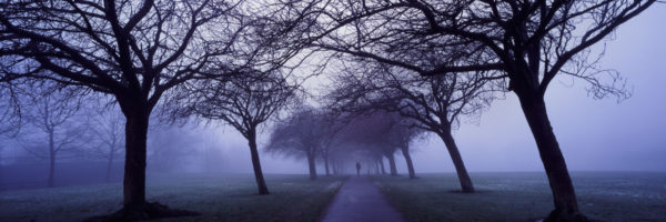 Slanted trees covered in mist along a path in Yorkshire