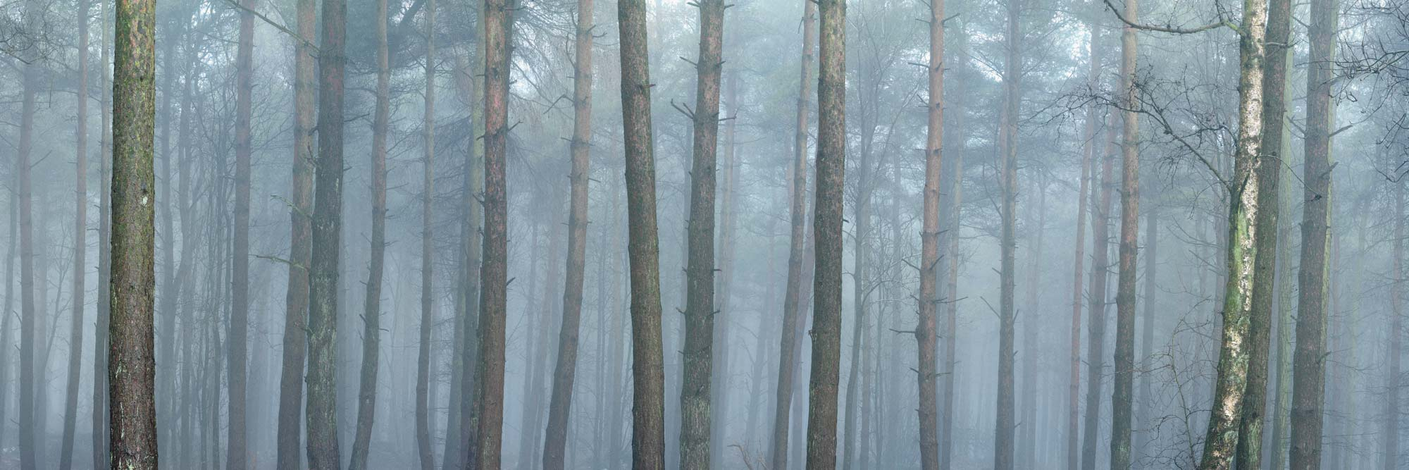Forest in winter with mist
