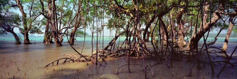 coastal Mangrove in malaysia