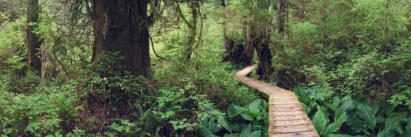 Path through a beautiful rainforest