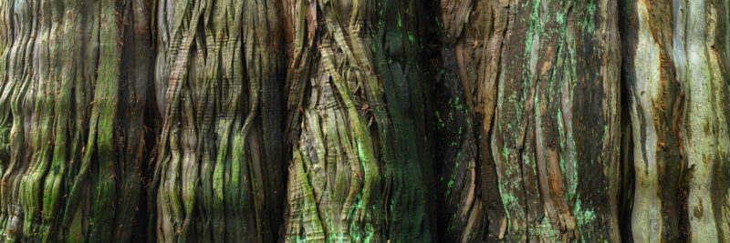 The incredible texture of a tree trunk