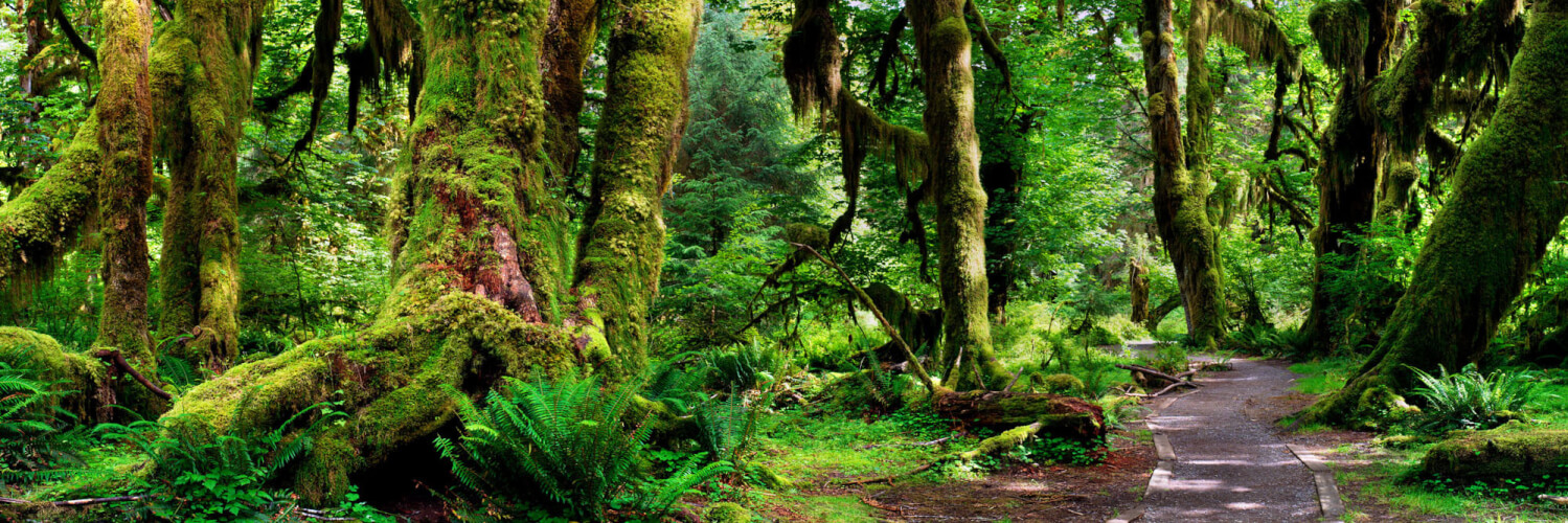 Hoh Rain Forest on the Olympic Peninsula