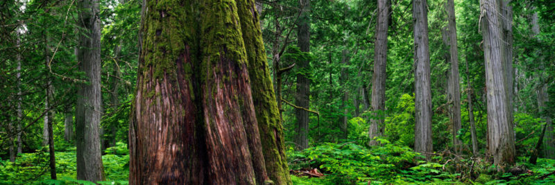 Rain forest in canada