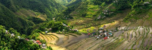 Philippines rice terrace