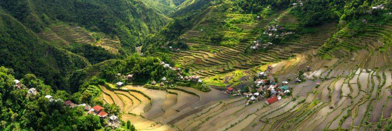 Philippines rice terrace