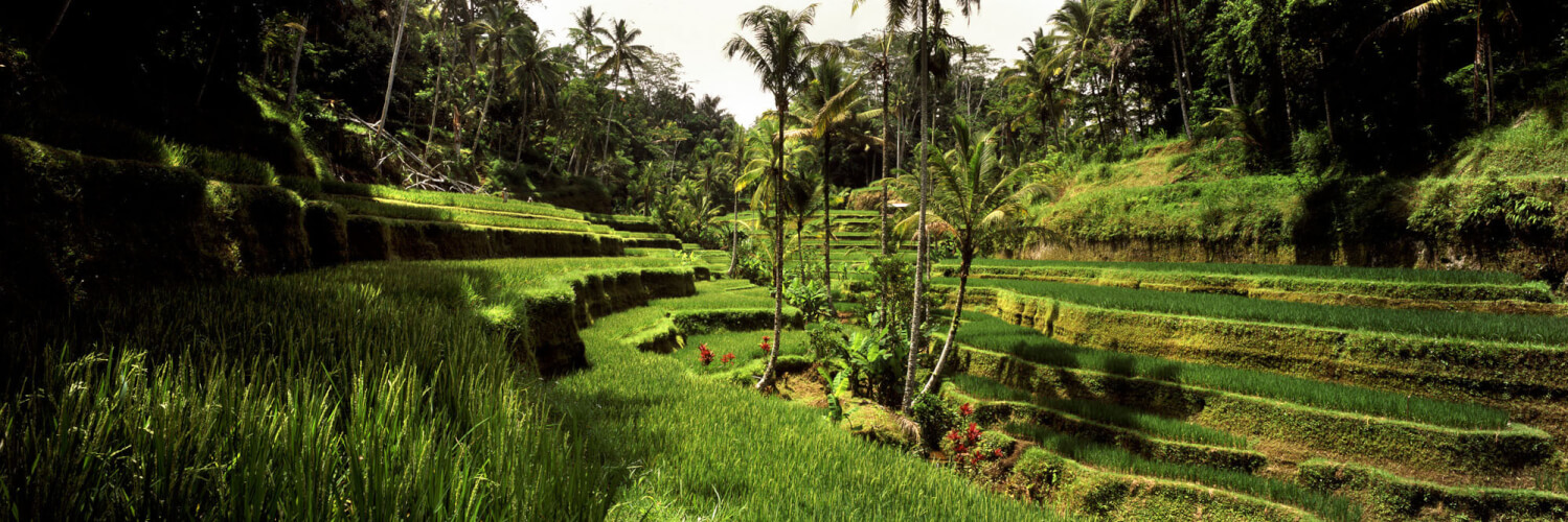 Green Tegallalang Rice Terraces in Bali
