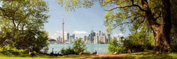 A sunny day with the birds on Toronto Island in Canada with the Toronto Skyline in the background