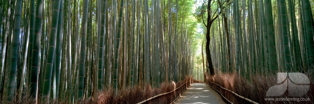 BAMBOO PATH SIDE