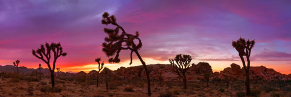 Amazing sunset at joshua tree national park