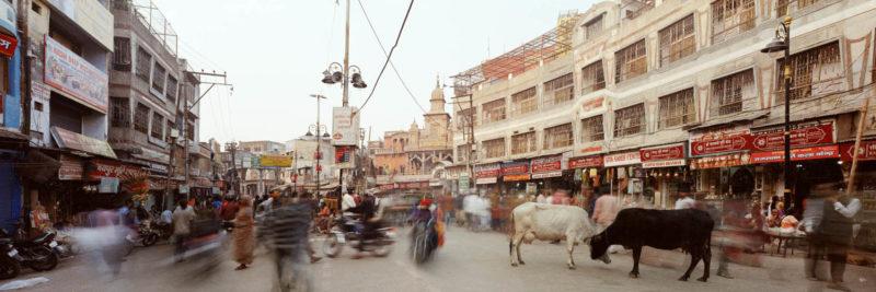 India cow street scene