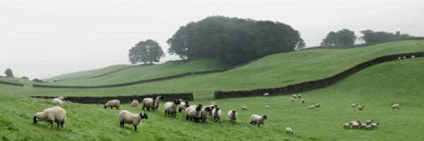 Hawes North Yorkshire dales