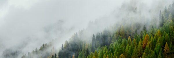 Alpine forest in autumn