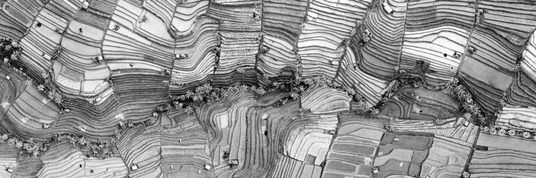 Rice terrace aerial