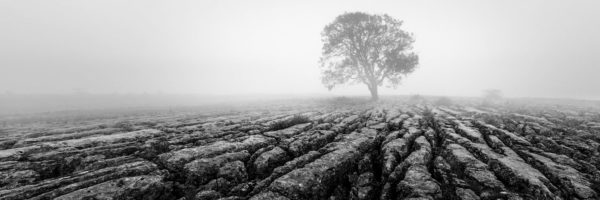 malham limestone and lone tree black and white