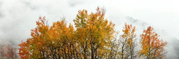 Autumn trees France