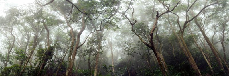 The peak forest in Hong Kong