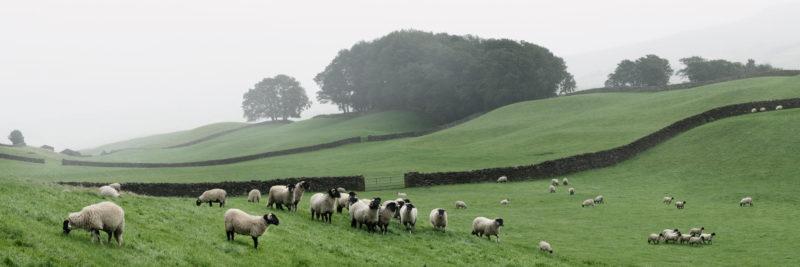 Wensleydale Hawes Yorkshire