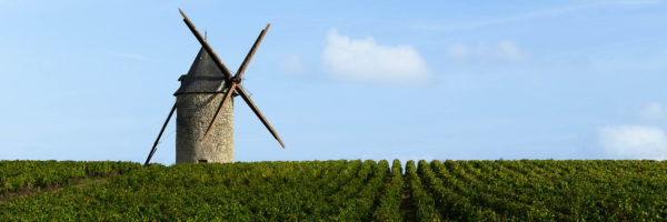 French vineyard with a windmill