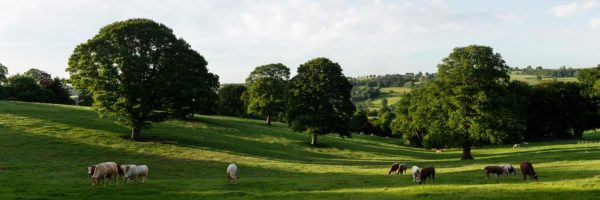 a panoramic print of beautiful nidderdale