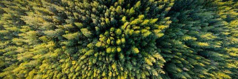 aerial over a forest in Ireland