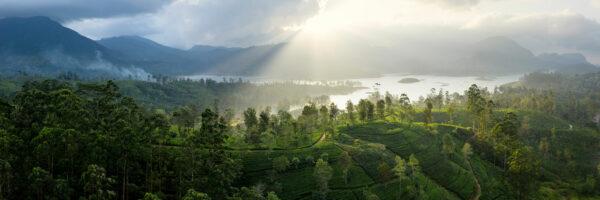 Maskeliya tea fields and lake