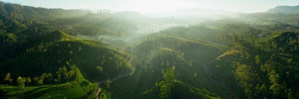 Maskeliya tea plantation aerial print