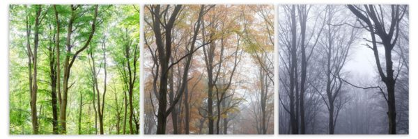 autumn fall and winter mist in the forest