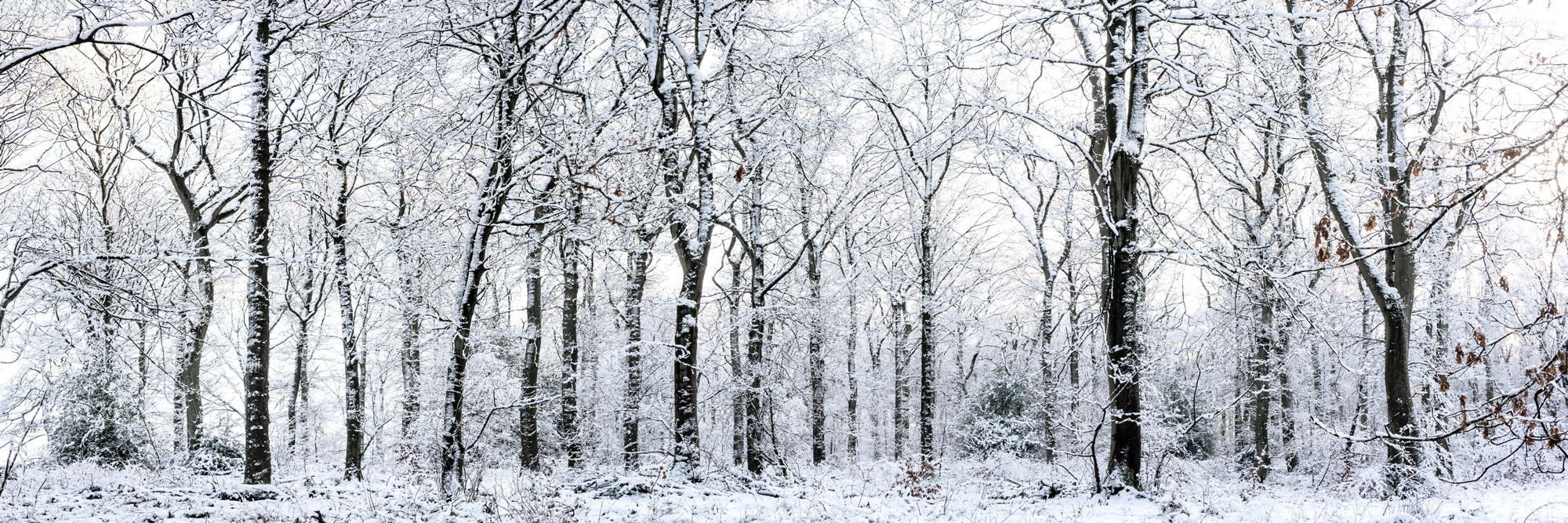 fewston forest after a snow storm
