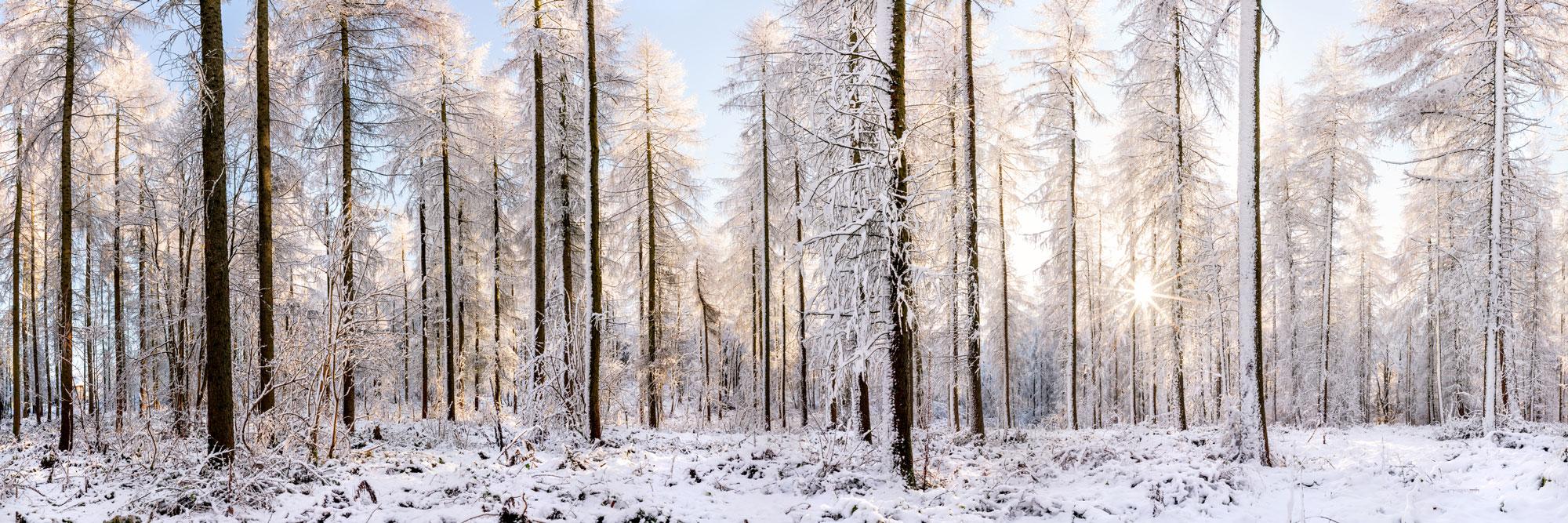 winter woodland as the sun shines through