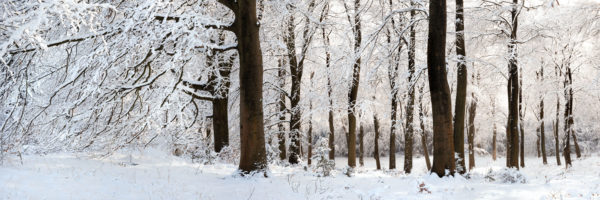 Yorkshire England woodland in winter