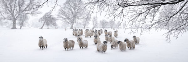 winter snow in the Yorkshire Dales