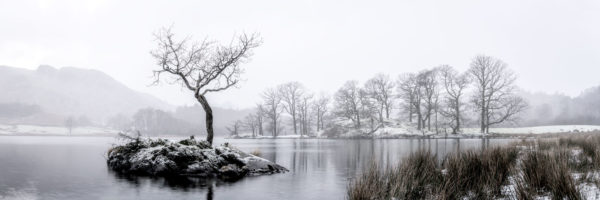 Lone tree covered in snow Ambleside