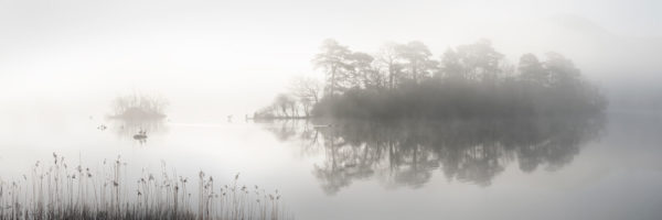 Lake in winter on a foggy day with birds