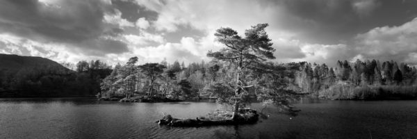 b&w print of tarn hows tree in the Lake District
