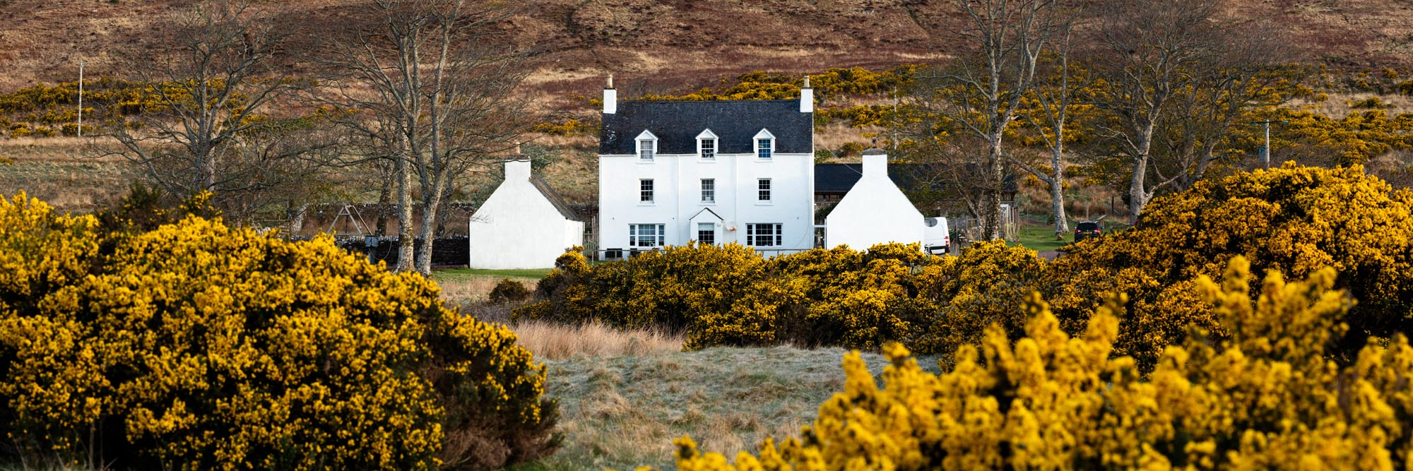 Scottish White House and gorse in spring in Applecross
