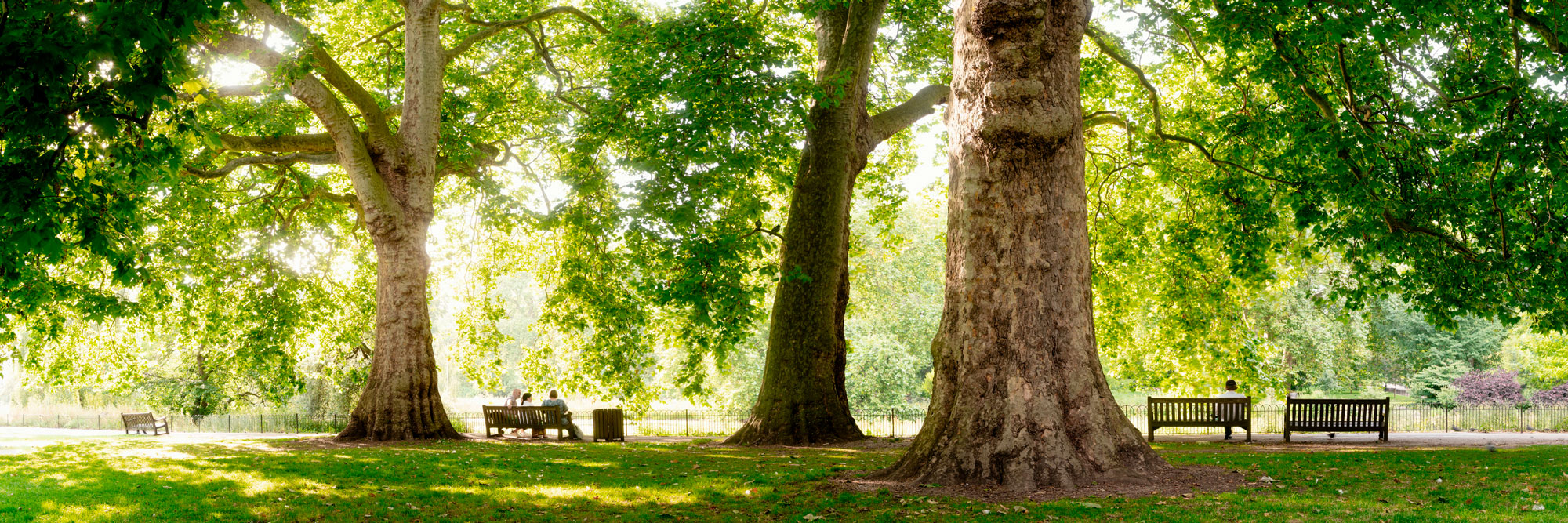 summer in a London park