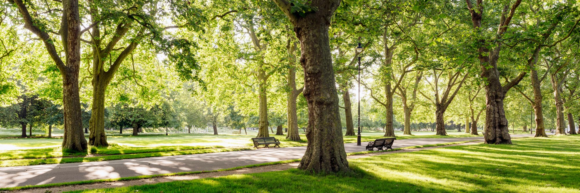 a morning in Hyde park