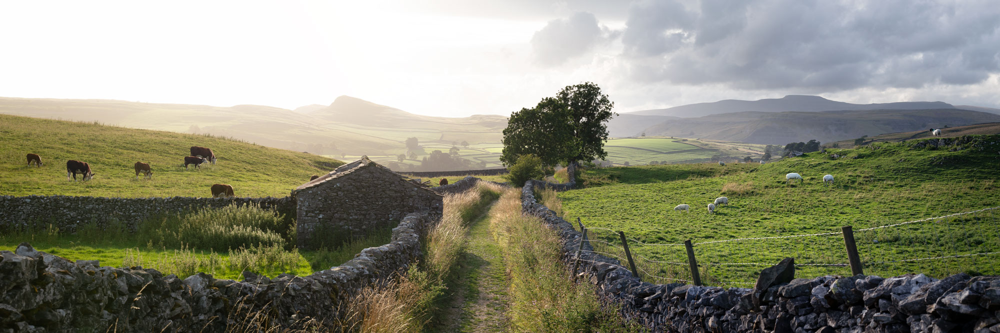 North Yorkshire dales hills and fields scene