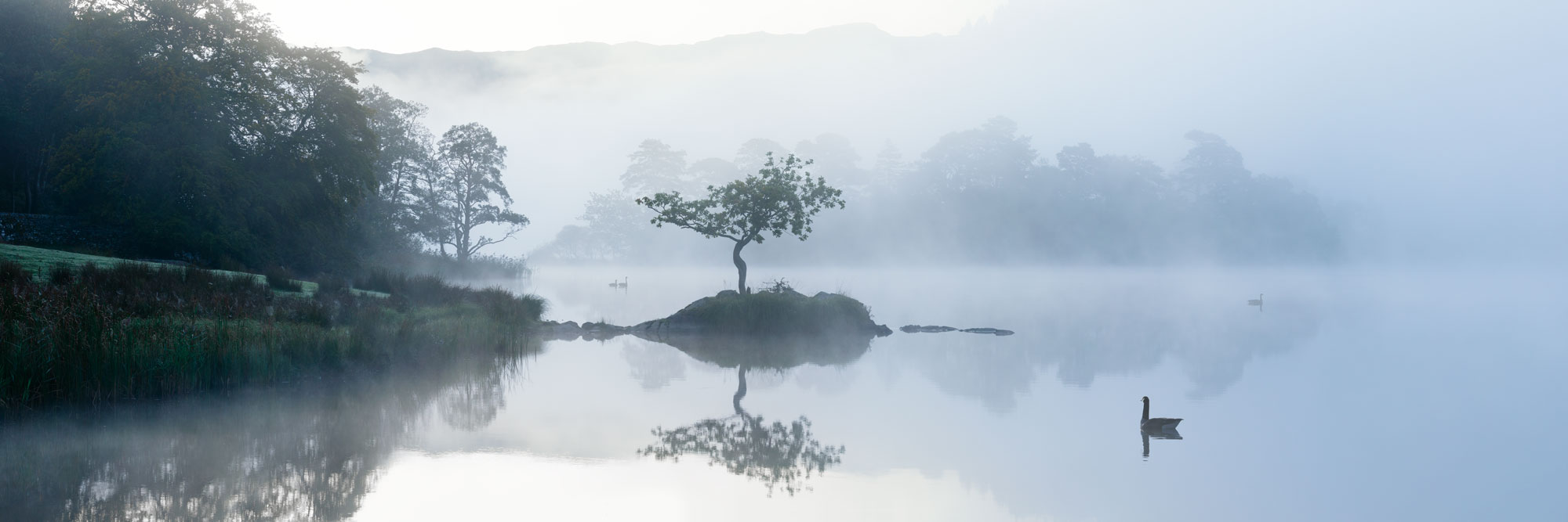 Lone tree on a lake on a misty morning