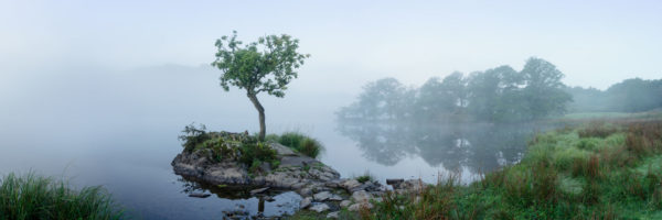 Lone tree on a lake in the morning mist