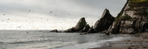 Panorama of birds in Westcombe bay beach in Devon